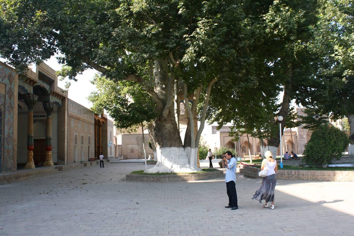 467-летняя чинара у захоронения Хаджи Ахрара. 2011
