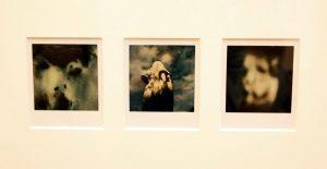 Arno Fisher. Из серии - Сад. 1977-2007 (Полароид) 2