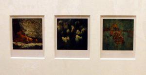 Arno Fisher. Из серии - Сад. 1977-2007 (Полароид) 3