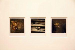 Arno Fisher. Из серии - Сад. 1977-2007 (Полароид) 4