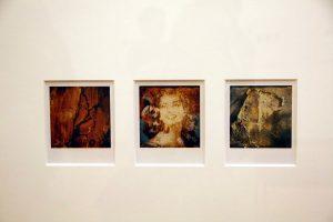 Arno Fisher. Из серии - Сад. 1977-2007 (Полароид) 5
