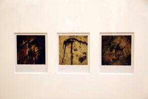 Arno Fisher. Из серии - Сад. 1977-2007 (Полароид) 6