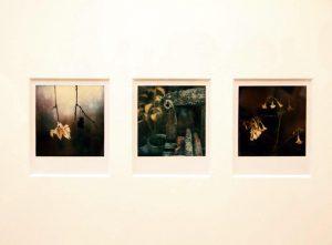 Arno Fisher. Из серии - Сад. 1977-2007 (Полароид) 7