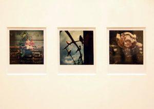 Arno Fisher. Из серии - Сад. 1977-2007 (Полароид) 8
