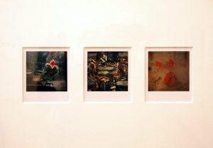 Arno Fisher. Из серии - Сад. 1977-2007 (Полароид) 9