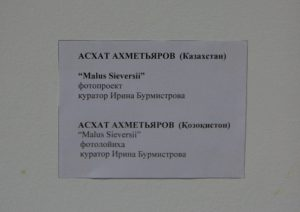 ashat-ahmetyarov-malus-sieversii